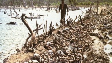 Photo of The Killing Fields